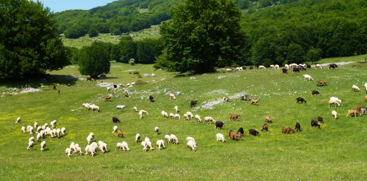 Psr 2014 2020 Misura 14 Benessere Degli Animali Sardegnaimpresa